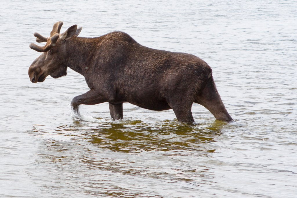 MARZ Photography.com